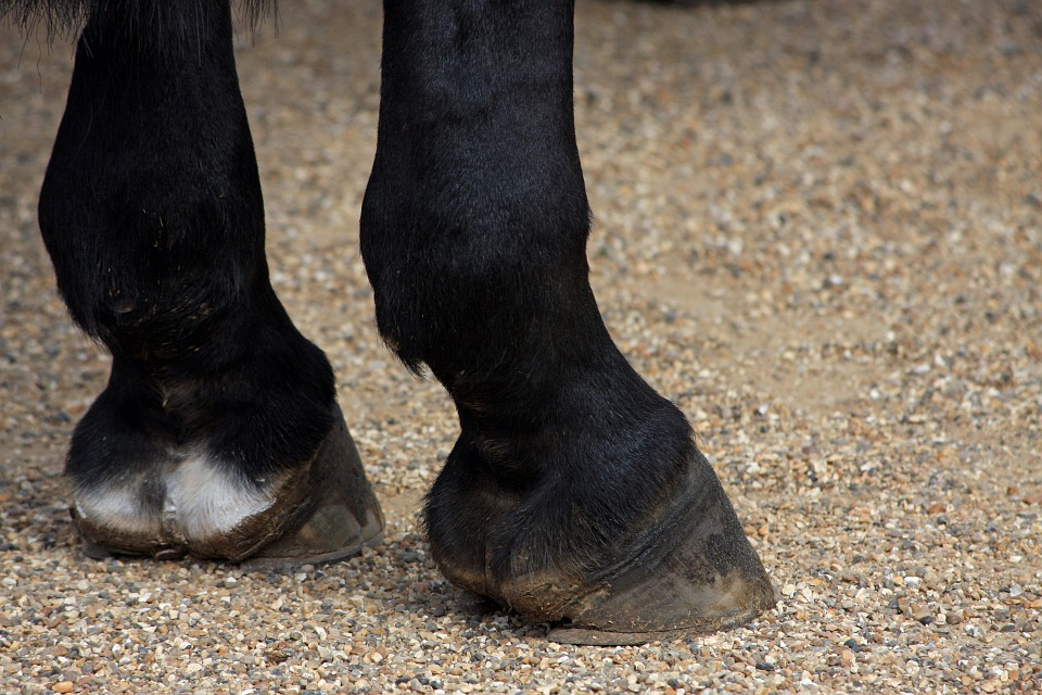 Horses have five toes, can you believe it?